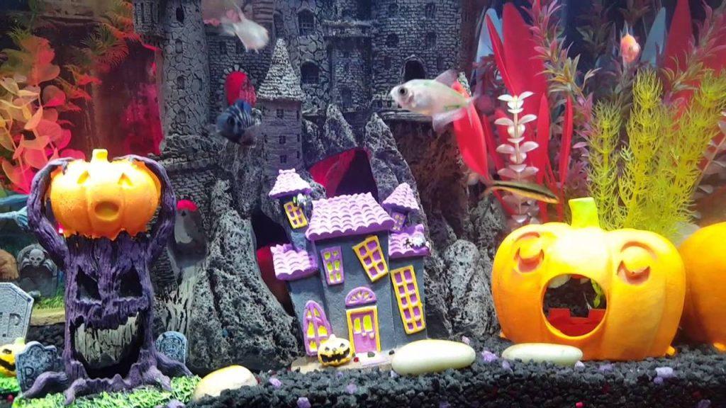 4 Planes para hacer durante Halloween en Zaragoza - El Acuario de Zaragoza también se engalana para celebrar Halloween