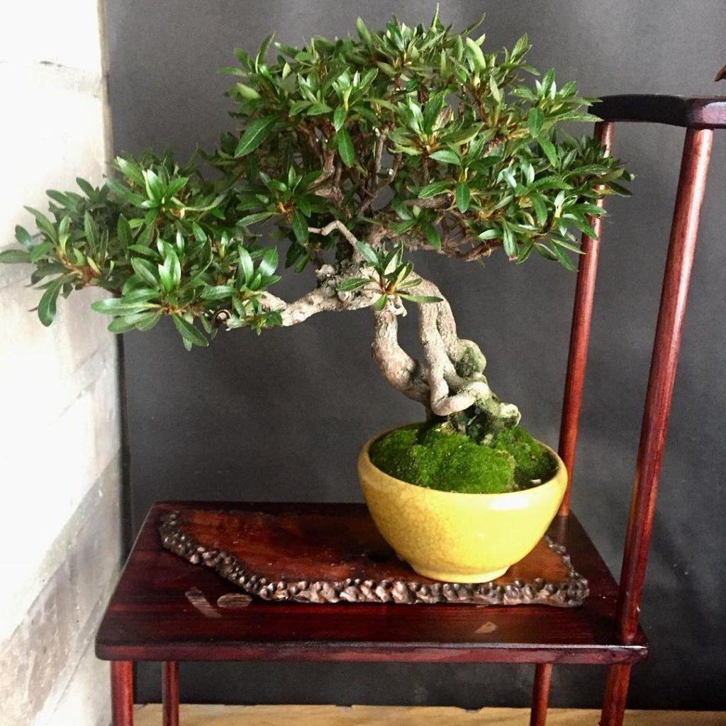 Un bonsai es uno de los mejores regalos made in zaragoza que le puedes hacer a tu madre para el día de la madre