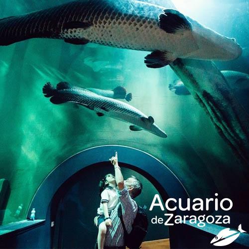 Acuario de Zaragoza